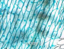Ex CLEAN GLASS! Nikon Plan APO 10/0.45 MICROSCOPE OBJECTIVE Lens 20.25mm 20982